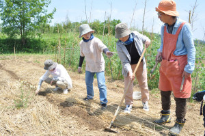 NPO里山人主催の綿栽培のワークショップはじまる