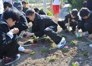 綾部中の生徒が植栽