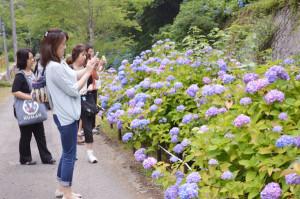真言宗東光院ではアジサイが見ごろになり、17日には大阪からも観光バスで約80人が訪れた。