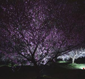 梅林公園ライトアップ