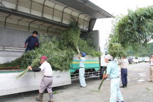 切り出した笹をトラックに積み込む市シルバー人材センター会員と三ツ星ベルトの社員ら(青野町で)
