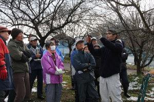 実際の木で実習できる梅のせん定講習会(市主催)が21日、舘町の市梅林公園で開かれ、市民ら二十数人が、府中丹東農業普及センター職員の曽根秀樹さんから技術を学んだ。