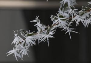 この冬一番の寒気と放射冷却の影響で厳しい冷え込みとなった26日朝、大気中の水蒸気が氷になって樹木や人工物に付着する「霧氷」と呼ばれる現象が市内各所で発生し、氷点下の自然美が見慣れた風景を幻想的に包み込んだ。