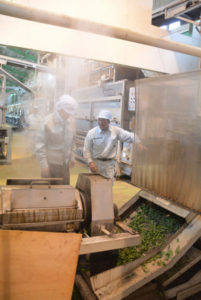 綾部の特産品の一つ、お茶の生産が最盛期を迎えている。