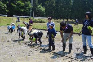 奥上林の「水源の里・草壁」(渡辺要治代表)は今年で2回目となる「どろんこ田植え体験」を22日、睦寄町の草壁公民館近くの田んぼで催した。大阪や神戸などの親子らも参加し、農作業を通じて地元住民たちと交流した。