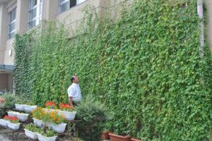 ゴーヤやアサガオといった蔓を伸ばす植物を育て、茂った葉で夏の日差しを遮ることによって、室内の温度上昇を抑えるなどの効果がある「グリーンカーテン」。市環境市民会議(中村孝行会長)は、綾部市内の民家や事業所などで今夏、設置されるグリーンカーテンの写真を募集している。
