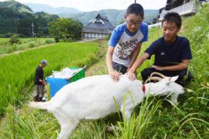 下替地町の四方久野さん宅の田んぼで今夏、農作業の助っ人として1匹のヤギが活躍。法面の雑草をムシャムシャと食べて、農業者にとって骨が折れる草刈り作業を一手に引き受けている。