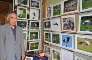 自宅近くに飛んできたコウノトリの生き生きとした姿を撮った写真を玄関に並べて展示している男性がいる。地元の高齢者の集まりや保育園から頼まれれば写真パネルを見せて話すこともある。わが国で一度は絶滅した特別天然記念物のコウノトリが飛来する古里の美しさを写真を通じて多くの人にアピールしたいと、きょうもカメラを片手にコウノトリを探しながら散歩をしている。