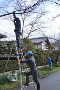 里町の高倉神社里宮参道の桜並木の景観保全に努めようと、地元住民有志らが10、11の両日、桜の木々の蘇生作業に取り組んだ。