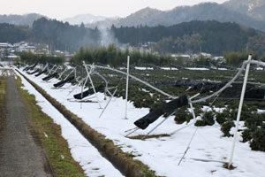 大雪で農業被害相次ぐ