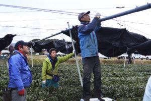 1月中旬の大雪で全壊した農事組合法人「たち」(内田保代表理事、50人)が舘町内に所有する茶用被覆棚の修復作業が、2月中に3日間かけて行われた。重機を持ち込んでの大掛かりな作業には、市内の茶生産組合のリーダーでもある中田義孝さんや出口則明さんを中心に多くの組合員らがボランティアで協力。茶業に携わる人たちの温かい支援によって、茶棚はほぼ元通りの状態に直った。