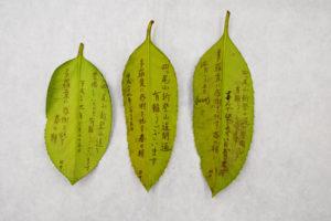 木の葉のお礼状