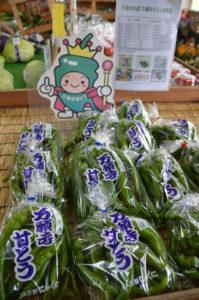 京のブランド産品である「万願寺甘とう」がこのほど、国が地域ブランドとして保護して生産者の利益増進や消費者の利益保護を図るための「地理的表示保護制度(GI)」に府内で初めて登録された。野菜としては近畿圏でも初となる。