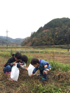 志賀郷地域住民らで構成する「七不思議伝説の里・志賀郷地域振興協議会」(前田拓己会長)の「小さな仕事部会」は18日、別所公会堂近くの畑で「小豆ひらい体験」を催した。