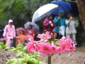 水源の里・鳥垣の渓谷散策会