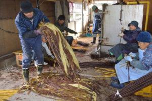 和紙の原料となる楮(こうぞ)の生産を通じて綾部の伝統工芸品「黒谷和紙」を側面から支えている白道路楮栽培推進協議会(大石博文代表)の楮の皮剥(は)ぎと出荷作業が18日から、白道路町にある加工施設で始まった。同協議会では毎年冬場に楮の「黒皮」を黒谷和紙協同組合に出荷しているが、今年は獣害で大打撃。初夏に鹿が楮の芽を食い荒らしため、生産量は例年(年平均約800㌔)の半分以下。大石代表も「こんな大きな被害は初めて」と悔しそうだ。