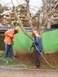 里町の高倉神社里宮参道の桜並木の景観保全に努めようと、地元住民有志らが5、6の両日、桜の木々の蘇生作業に取り組んだ。