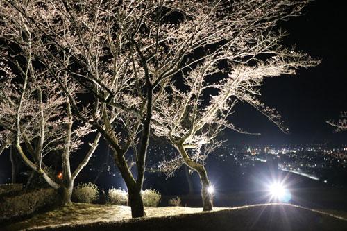 味方町の紫水ケ丘公園内の「さくら広場」では先月末から、綾部青年会議所(綾部JC、小寺建樹理事長)が夜桜のライトアップを始め、夜空に浮かぶような桜並木と市街地の夜景との競演が楽しめる。14日まで。