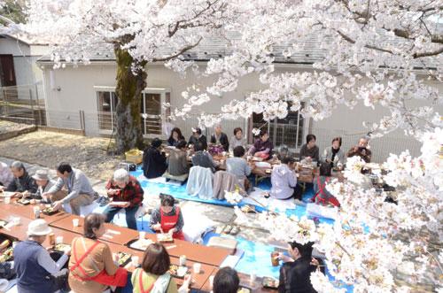 満開の桜の下で開かれた上野町食事会(新町で)