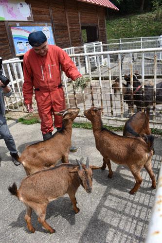 ゴールデンウイークにはニューフェースのヤギたちを見に来てください―。位田町の綾部ふれあい牧場に23日、新たに4頭のヤギが仲間入り。いずれも在来種「トカラ系」の雌で、小型で毛が茶色いのが特徴。既存のヤギとヒツジとともに人気者になりそうだ。