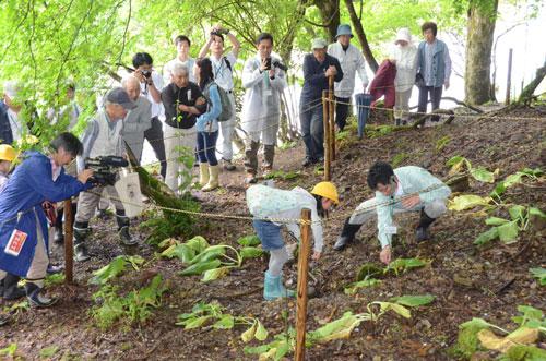 中・奥上林地区にある様々な「地域の宝」について京都府立大学の教授らが専門分野ごとに講義する連続講座「水源の里自然大学」(同大学・あやべ水源の里連絡協議会主催)が今月からスタートした。初日となった7日には光野町に自生する希少植物「ヒメザゼンソウ」=5月13日付の本紙既報=について学んだほか、今年11月までにあと4回、上林の豊かな自然などをテーマにして開かれる。