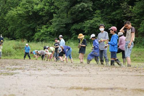 志賀郷町の「藤谷」という場所で米作りを行うIターンの3家族と地元有志が今年、「志賀郷ゴキゲン化計画」というグループを発足。米作りや山菜採り、薪(まき)割り、狩猟などといった田舎の〝暮らし仕事〟を地域外の家族に通年で提供する「生きる力育むプログラムin綾部」を企画した。7月の本格スタートを前にした5、6の両日には、「お試し体験」で田植えと大豆まきを開催。両日で計9組約40人の家族が参加した。